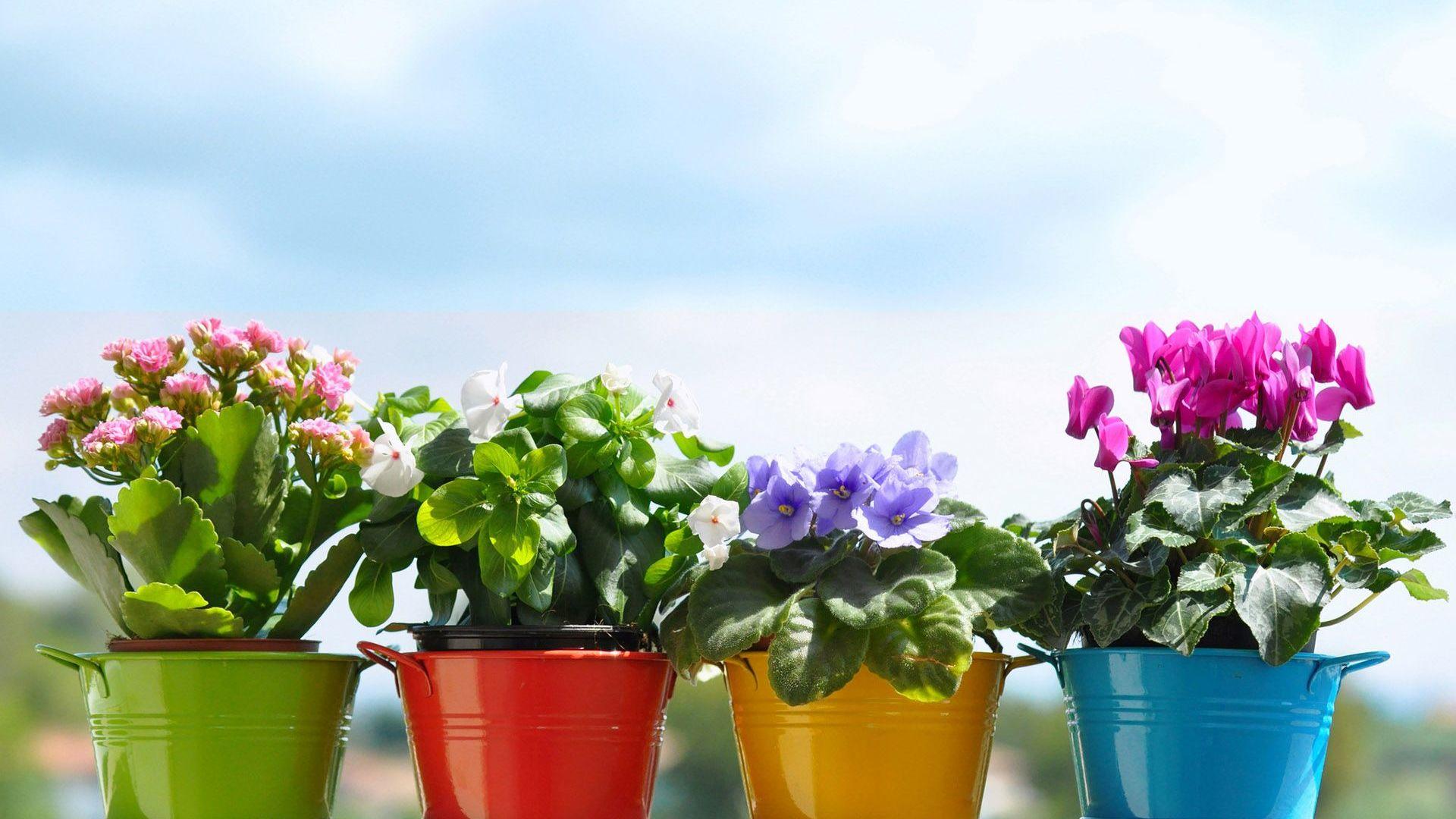 Показать фото горшечных цветов